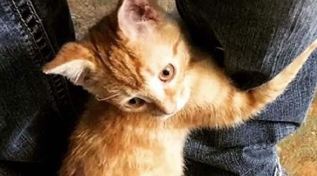 «Не уходи!» – будто кричал котёнок, цепляясь лапками за ногу посетителя. Малыш находился в больнице, пережив пожар