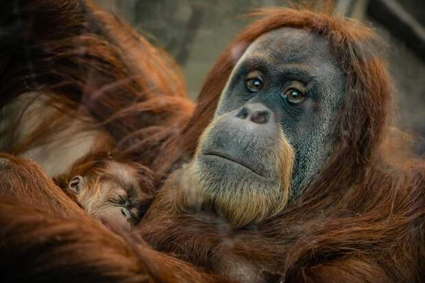 Ученые спрогнозировали смерть трети видов животных ирастений