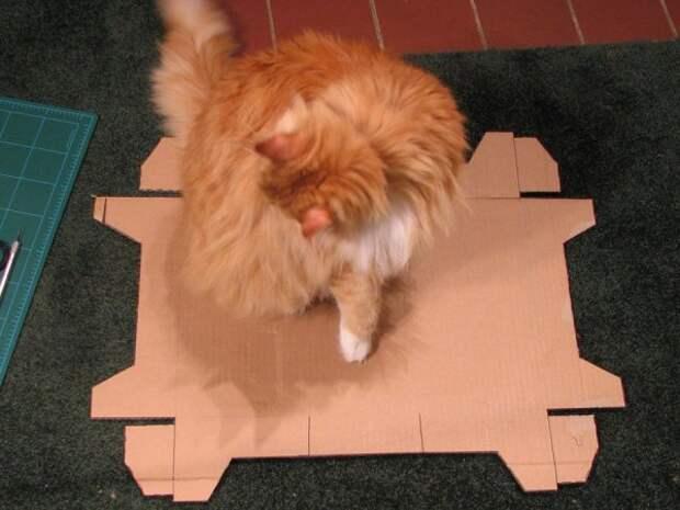 Диван для любимого котейки (20 фото)