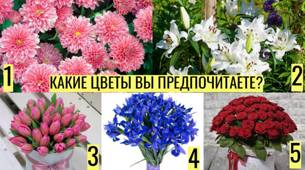 Тест: о чём может рассказать выбранный вами цветок