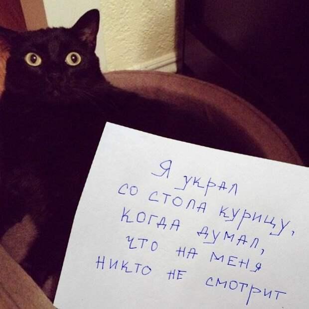 Коты-преступники, которых хозяева осудили за их злодеяния