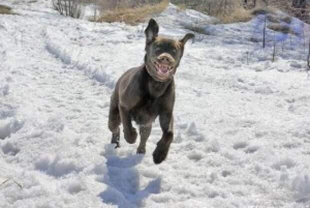 Smeshnyie sobaki4 300x201 Смешные собаки