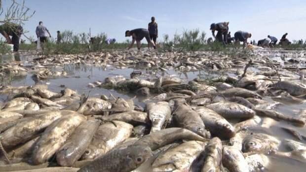 В Атырау озвучили масштабы замора рыбы