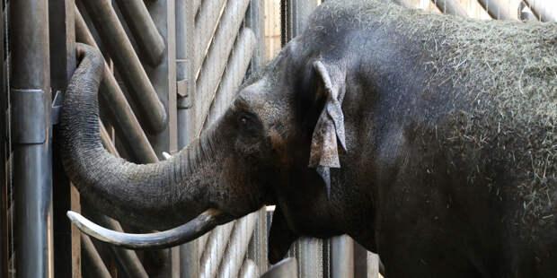 Подравшиеся в казанском цирке слонихи переехали в Крым