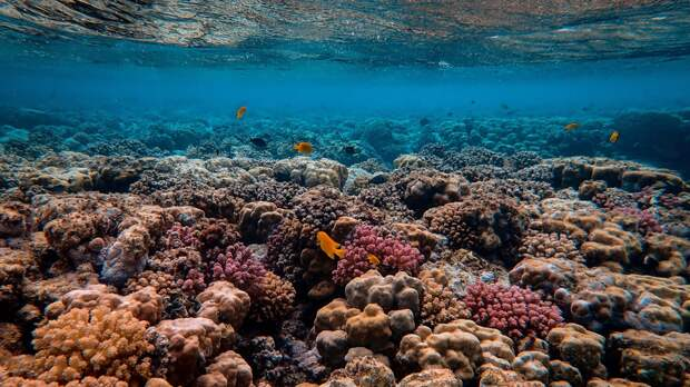 Австралийские океанологи предрекли исчезновение 94% кораллов к 2050 году