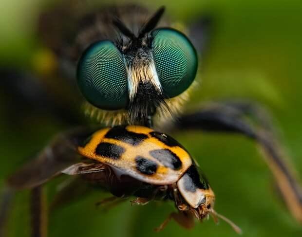 insects51 Портреты насекомых