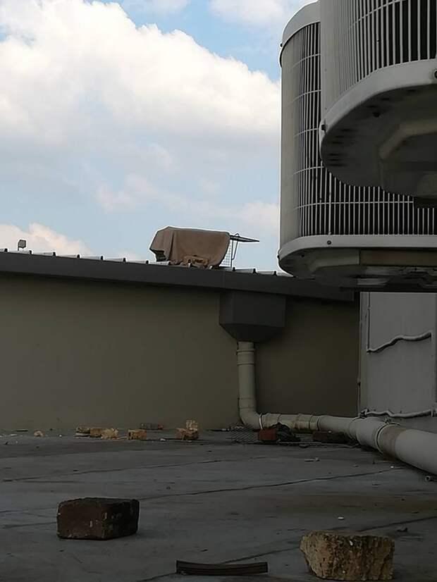 65-летняя женщина не побоялась залезть на крышу торгового центра, чтобы достать котенка