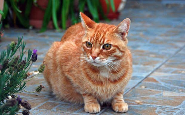 Кот улетел, но обещал вернуться