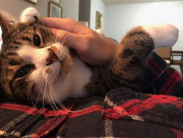 Благодарный кот всюду следует за хозяином, и даже на фото с выпускного вы увидите его пушистую морду