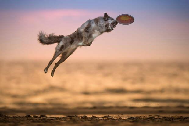 Супер собаки в фотографиях Клаудио Пикколи 25