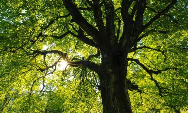 Каждый третий вид деревьев находится под угрозой исчезновения