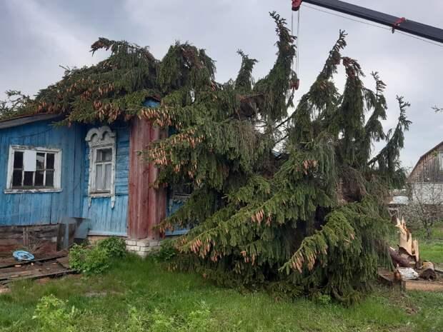 Под Рязанью ель рухнула на жилой дом