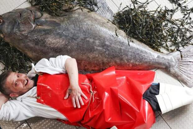 В Шотландии выловили рыбу размером с человека