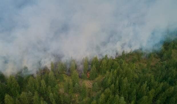 Карелии прогнозировали ухудшение ситуации слесными пожарами