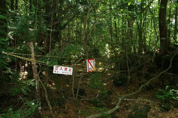 forests44 Леса с другой планеты!