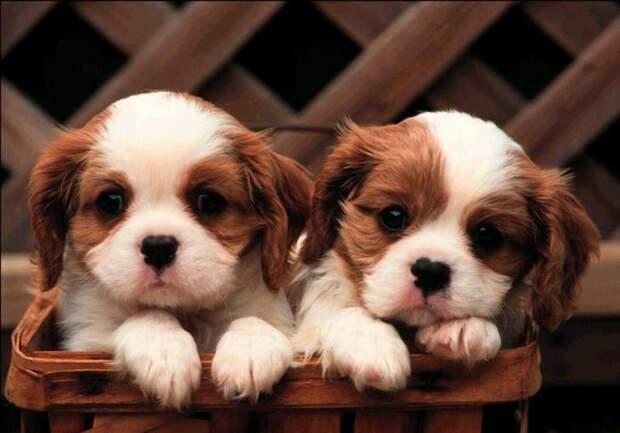 Милые щенки обои скачать - с размерами x px скачать бесплатно.