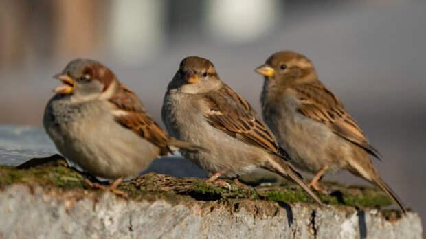 Почему из городов пропадают птицы?