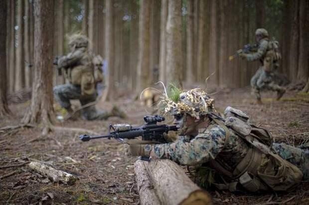 Бывший подполковник армии США Дэвис предрек возможную войну между Америкой и Россией в случае вступления Украины в НАТО