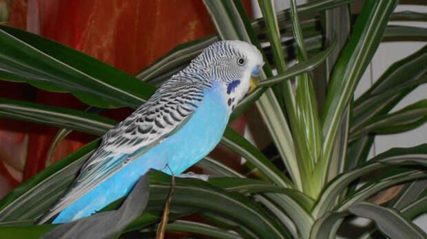Держите попугая подальше от комнатных растений: они могут представлять опасность
