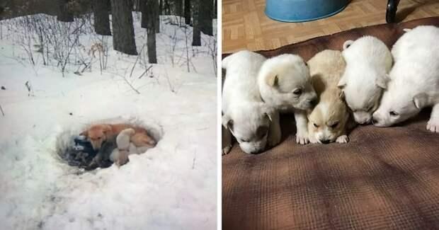 Собака три недели жила с щенками в сугробе, пока их спасли