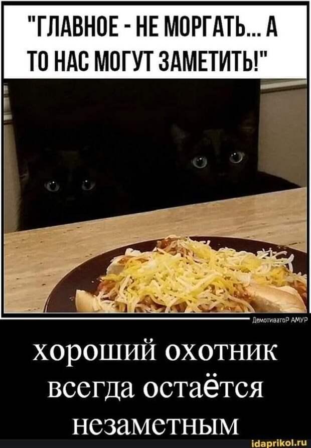 """Возможно, это изображение (кот и текст «""""главное HE моргать... A TO нас могут заметить!"""" демотиватор амур хороший охотник всегда остаётся незаметным idaprikol.ru»)"""
