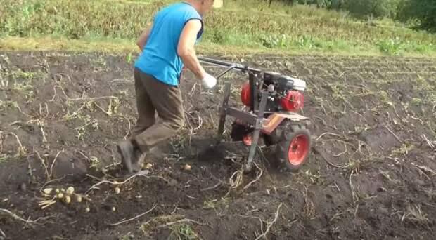 Простая и эффективная картофелекопалка, которую можно сделать своими руками