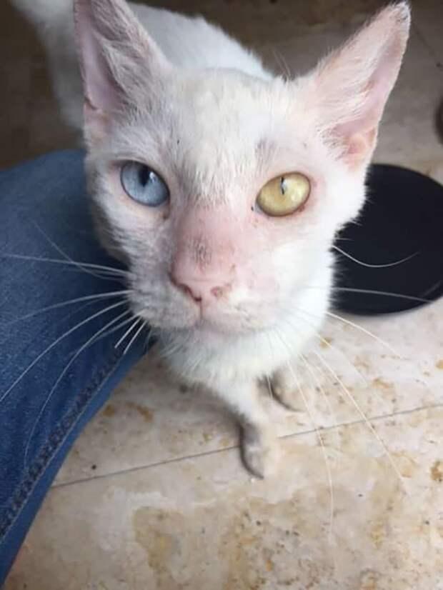 кот с цветными глазами