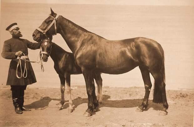 Племенные красавцы на выставке 1896 года