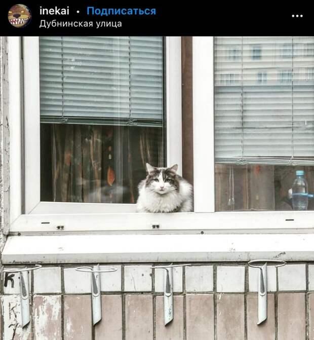 Фото дня: кот на Дубнинской вышел на прогулку
