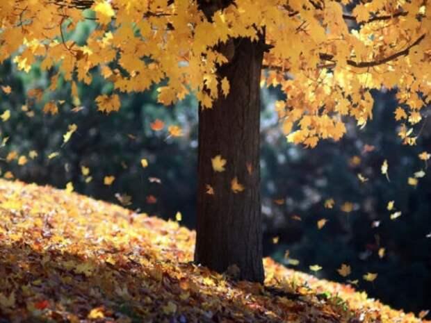 Шепотки на падающие листья: как привлечь удачу в золотую осень...