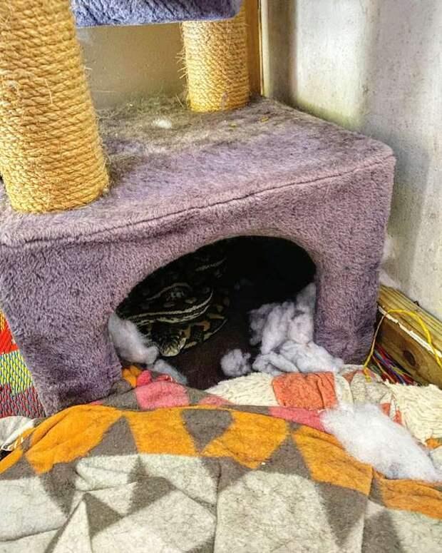 Семья забила тревогу, когда кошка начала вести себя не так, как всегда. Оказывается, в дом заползла змея…