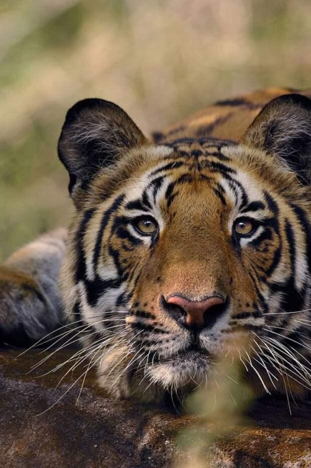 10 видов животных, которых за 40 лет стало в два раза меньше по вине человека