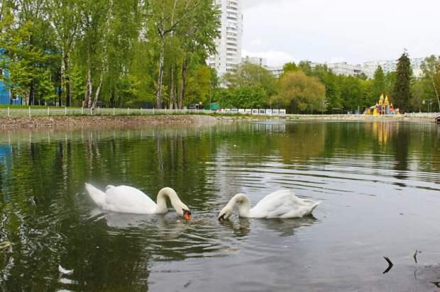Сотрудники Лианозовского парка рассказали, чем кормить Ромео и Джульетту