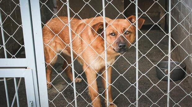 Зоозащитников под Ростовом проверят после жалоб обиздевательствах над животными