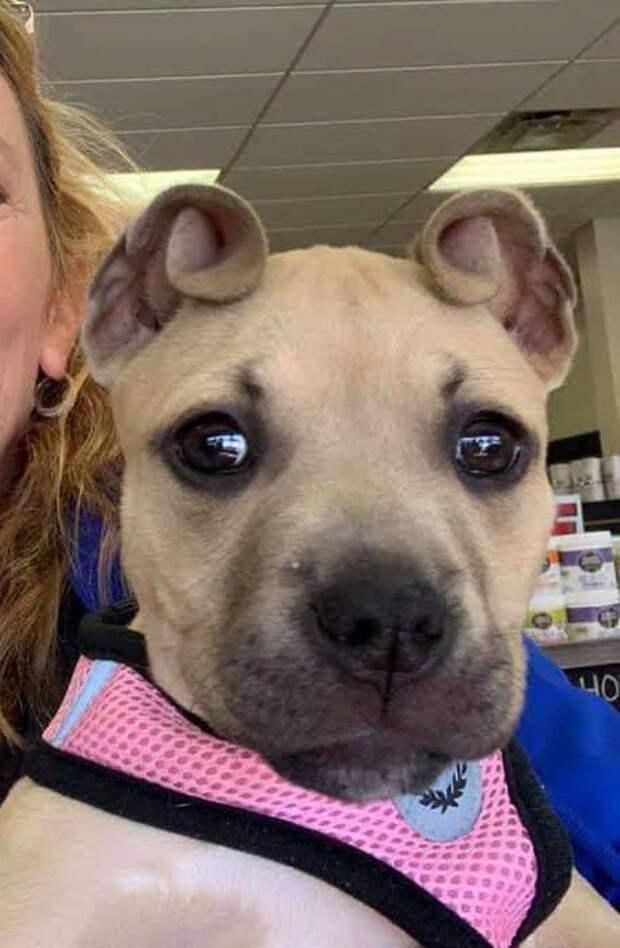 Девушка нашла на улице тощих щенков, но у одного были очень странные ушки