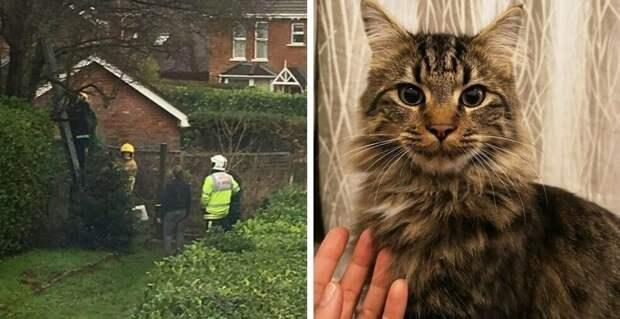 Кот залез на дерево и застрял, хозяйка полезла его спасать и тоже застряла. Потом приехали пожарные дерево, животные, застряли, история, кот, пожарный, спасение