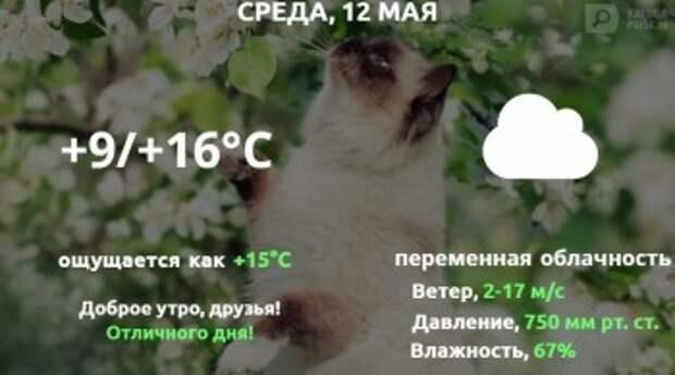 Прогноз погоды в Калуге на 12 мая