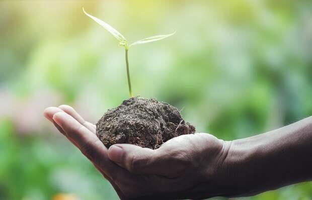 В Открытом саду Ижевска пройдет «Разделяйка»