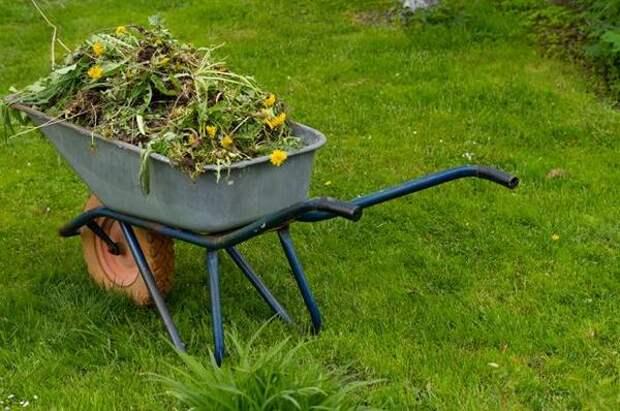 Бурьян с пользой. Как применять в хозяйстве сорняки