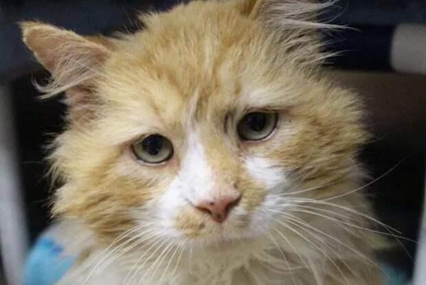 Кот прошел 20 км в поисках бросивших его хозяев