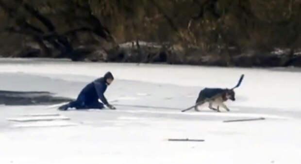 Спасение собаки, провалившейся под лед