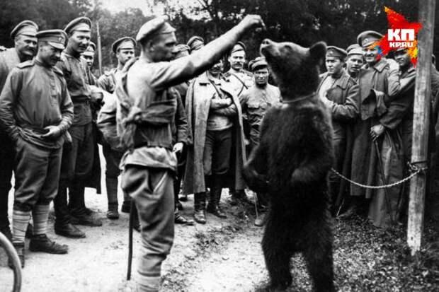 Как уральский медведь сражался с немцами в Первую мировую