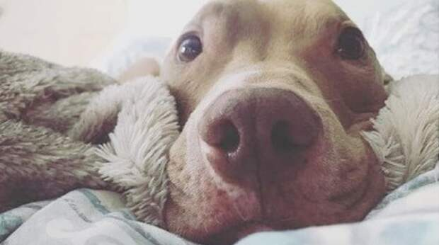 Брошенный и больной, пес с тоской в глазах нашел хозяев и научился «улыбаться»