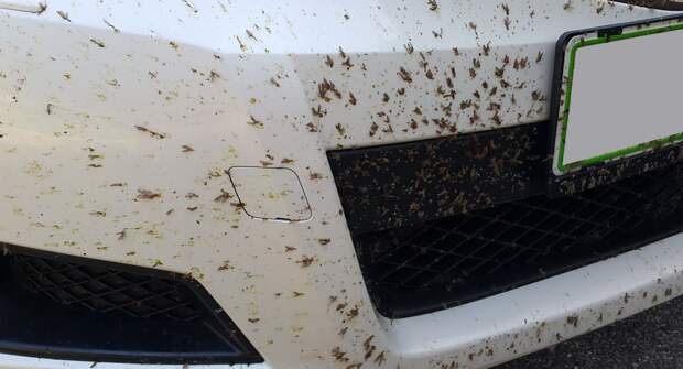 Как быстро убрать следы насекомых с лобового стекла