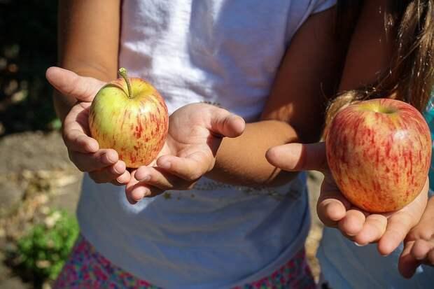 Яблочный Спас в Южнопортовом отметят мастер-классом и викториной