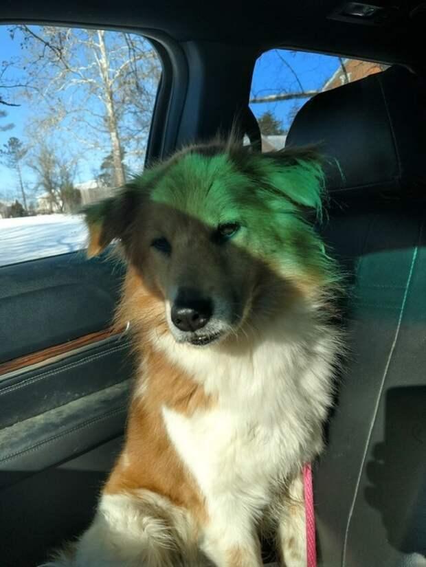 «Я вас так жду!»: преданная собака сидела в снегу, ожидая хозяев. Она не знала, что о ней давным-давно забыли