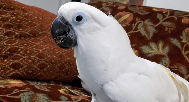 - Я друг, а не курица, - сообщил попугай гостям