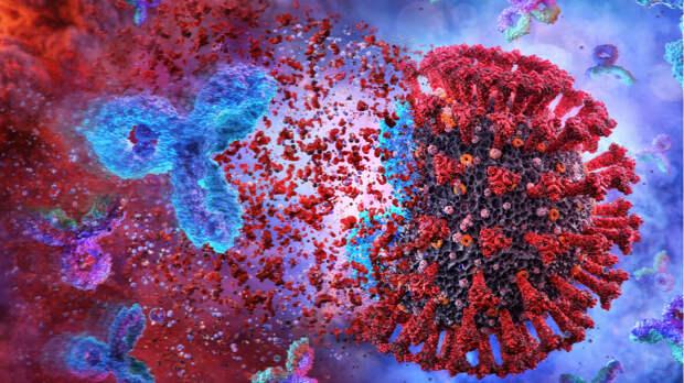 Ученые изучат на людях реакцию иммунитета при повторном заражении COVID-19