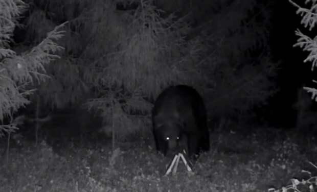 Пчеловод из Удмуртии поймал дикого медведя в фотоловушку