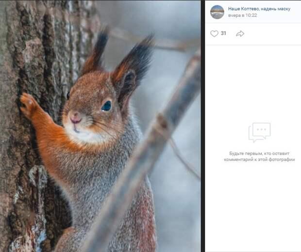 Фото дня: белки Тимирязевского леса уже готовятся к весне